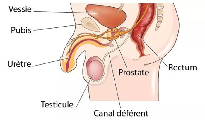 prostatite symptômes